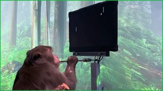 Monkey controls computer with its brain